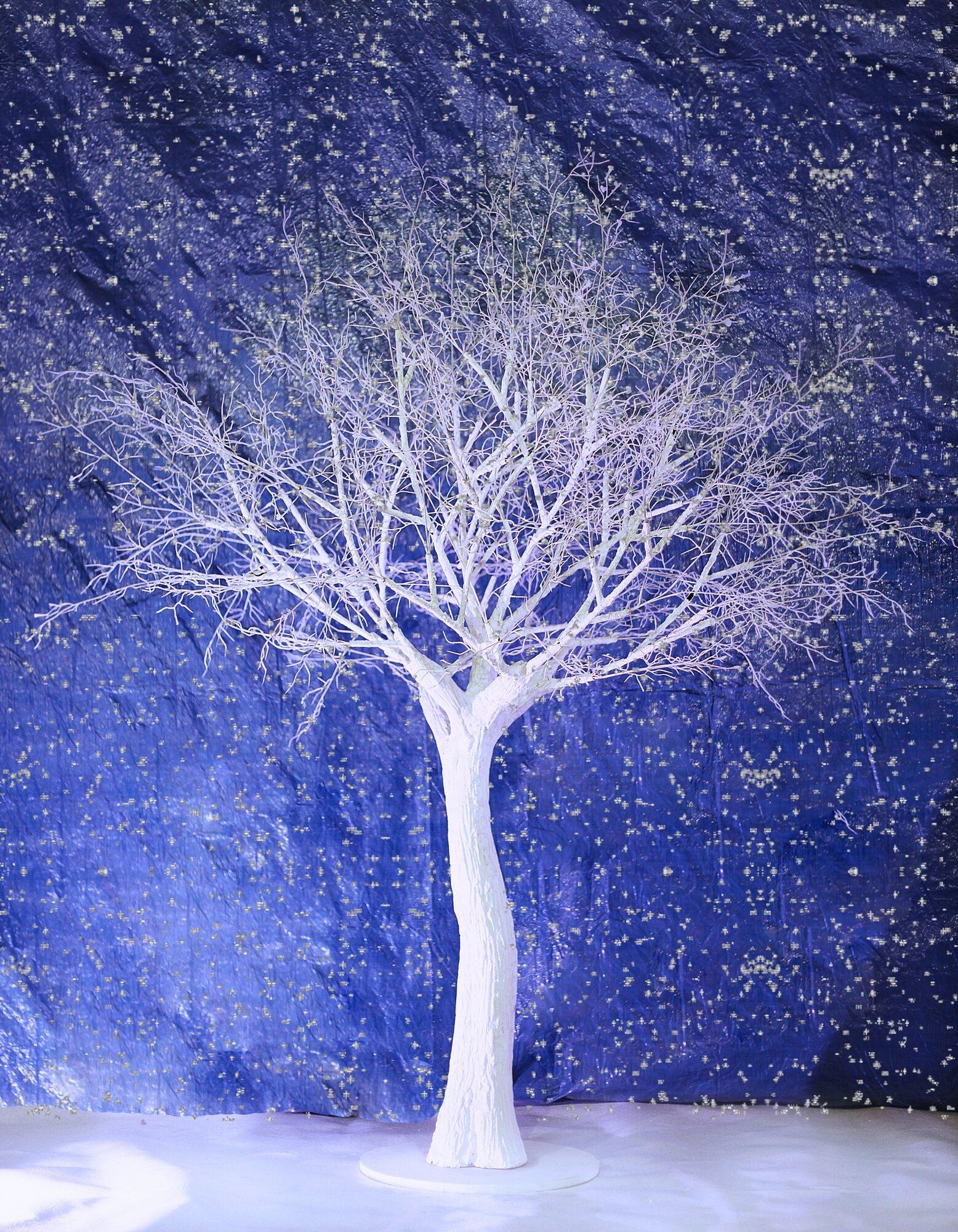 """Аренда дерева """"Белое дерево с ветками без листьев"""" 2м."""