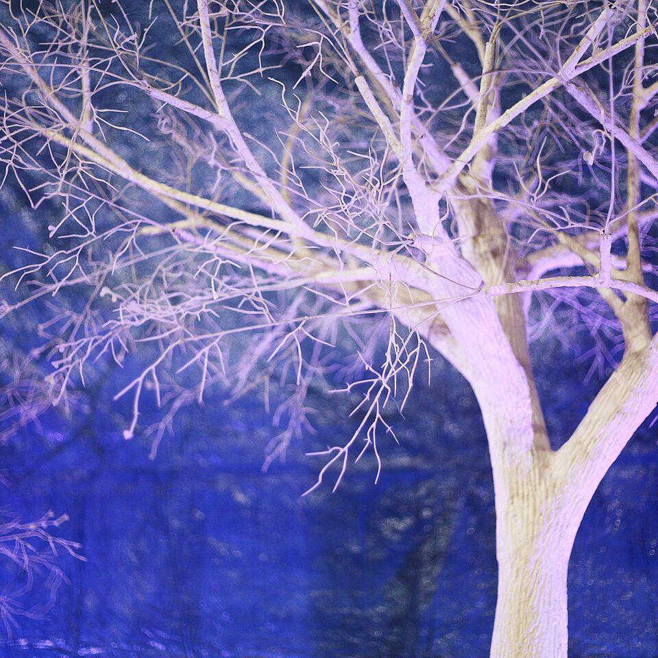 """Аренда дерева """"Белое дерево с ветками без листьев"""" 3м."""